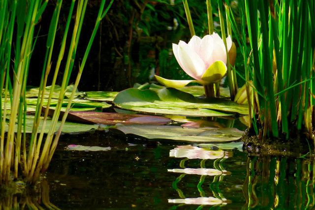 Anima Gardens Pond