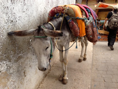 Donkey in Fes | So Morocco Tours