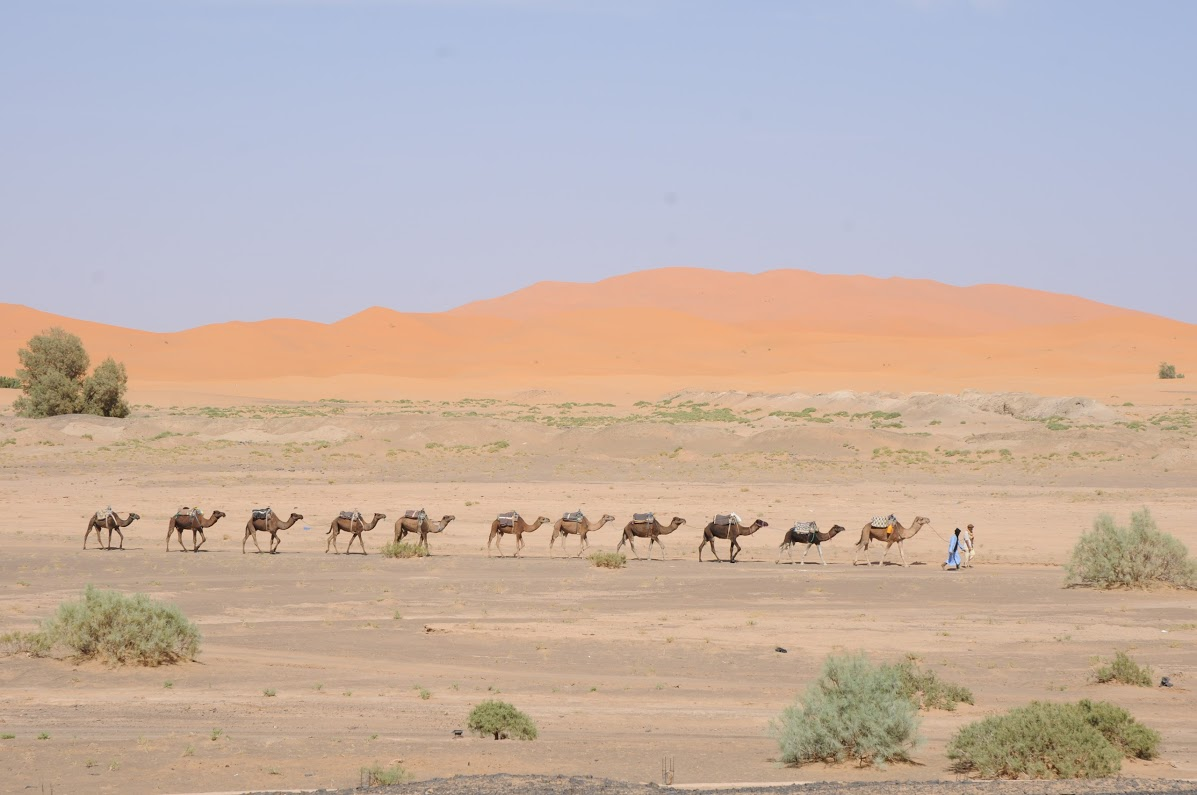 Erg Chebbi Dunes & Camel Train | So Morocco