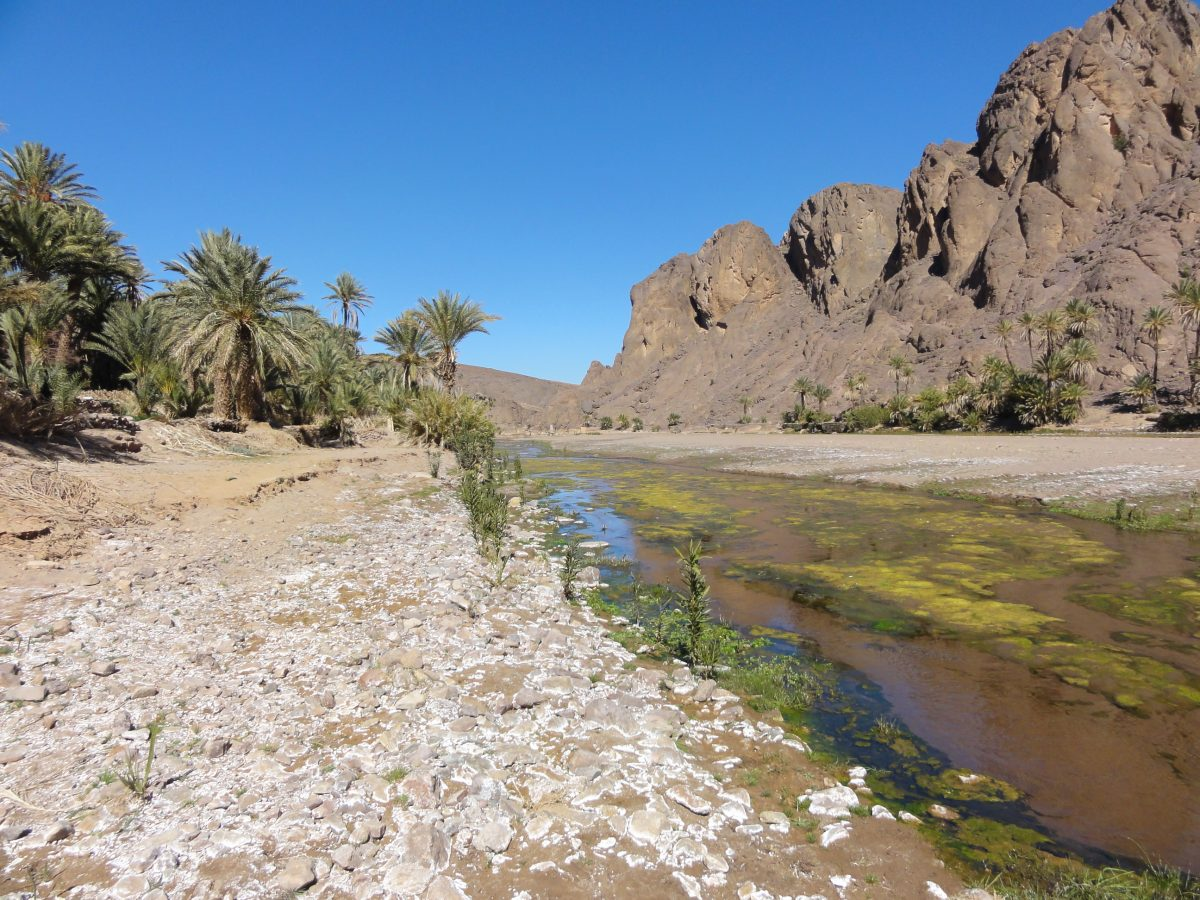Morocco Road Trip - Fint Oasis
