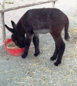 Baby Sultana feeding
