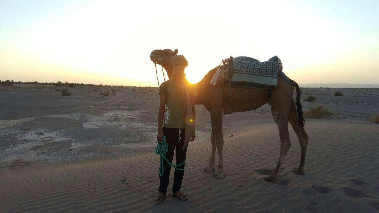 camel and desert nomad guide