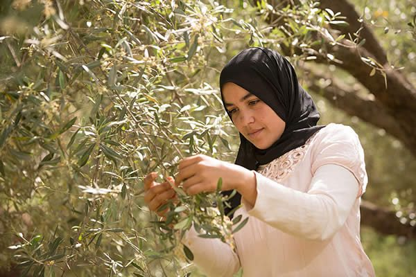 Morocco Gold olive-oil-picker