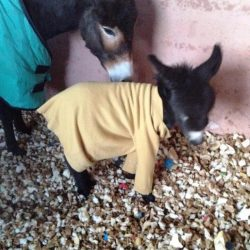 baby donkey So Morocco