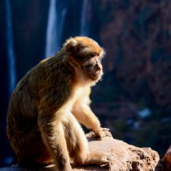 monkey 14 day morocco tour