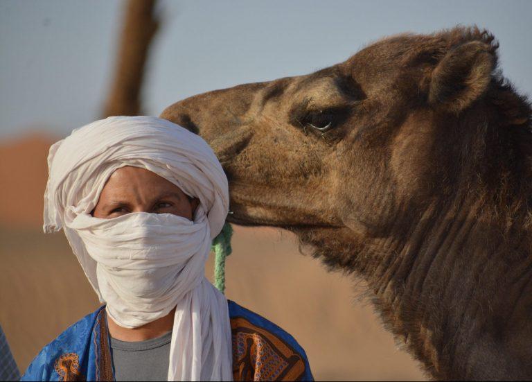 Hammid Nomad Guide & Camel